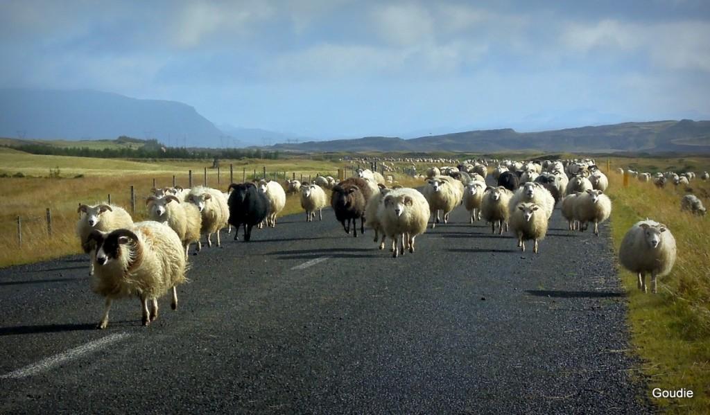 Journée du mouton