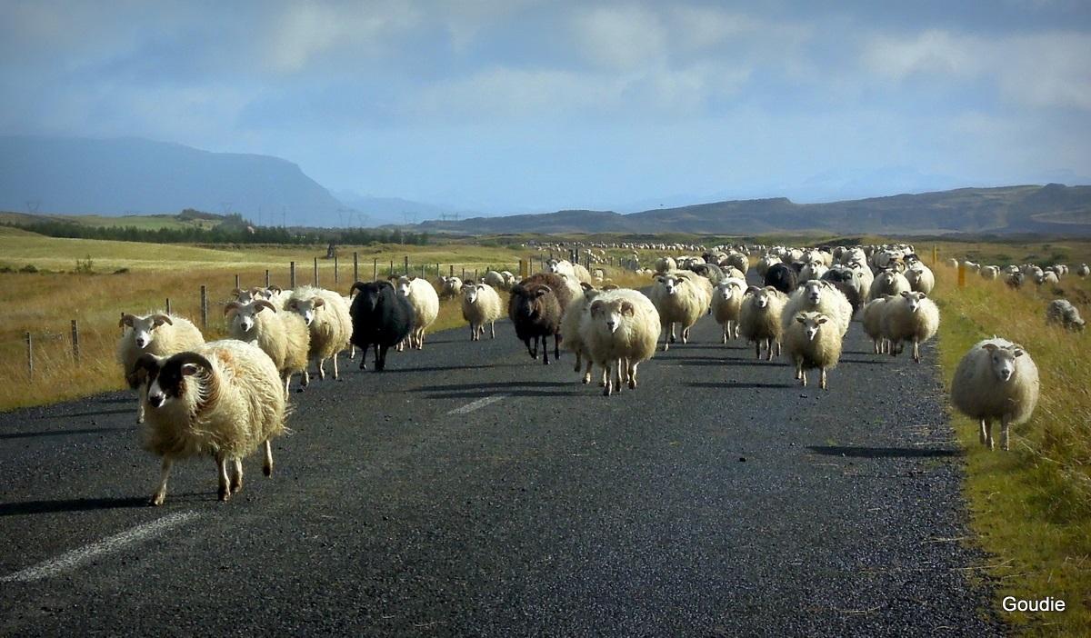 J'avoue que... - Page 6 Journee-du-mouton1